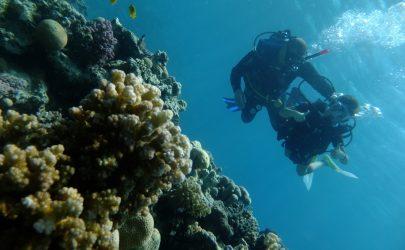 PADI Scuba Diver Course (Hurghada)