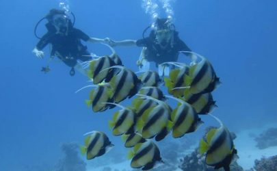 Daily Dives  & Dive Packages ( Certified Divers )