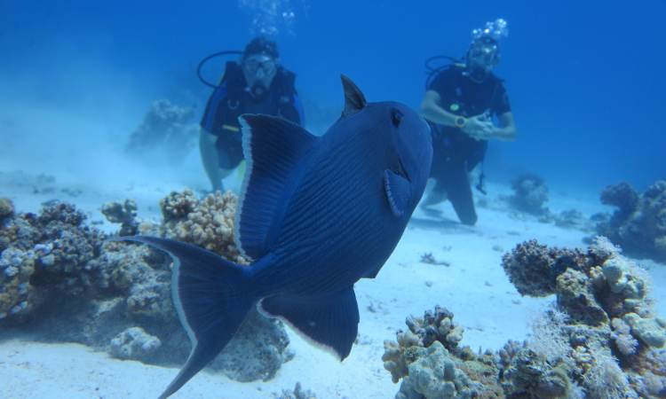 Daily Dives Packages in Hurghada ( Certified Divers )
