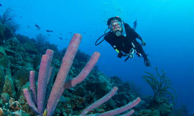 PADI COURSE – PROJECT AWARE SPECIALIST