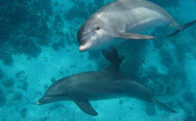 Dolphinhouse-Bootsausflug
