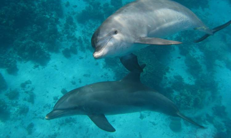 Dolfijnen Dagtrip