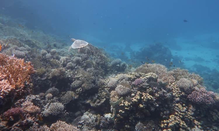 Snorkeling Trip Hurghada