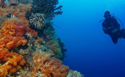 PADI Diving Courses in Hurghada